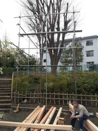 ツリーハウスの木.jpg